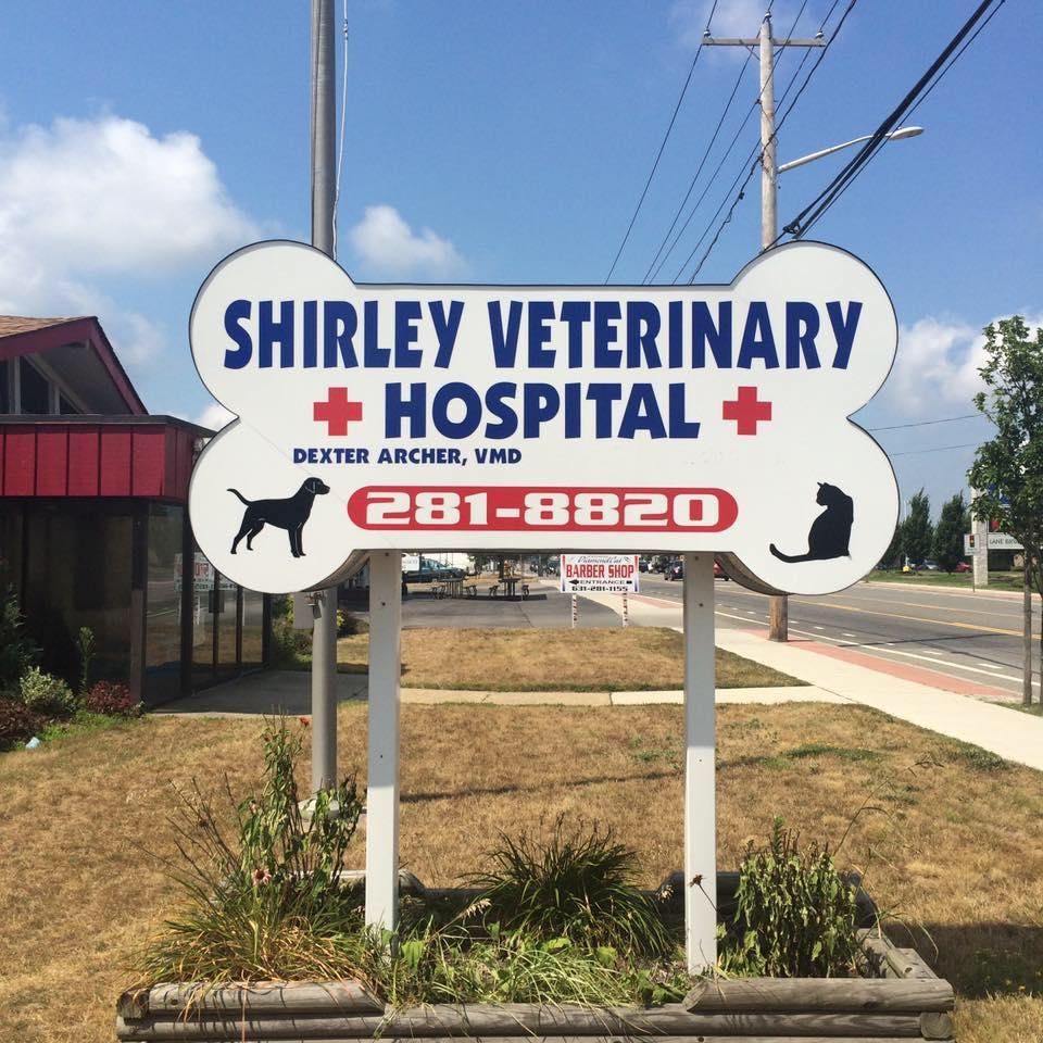 vet, dog, cat, kennel, shelter, adopt