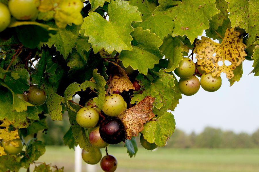 The Shepherd's Harvest – Nutritional Supplements
